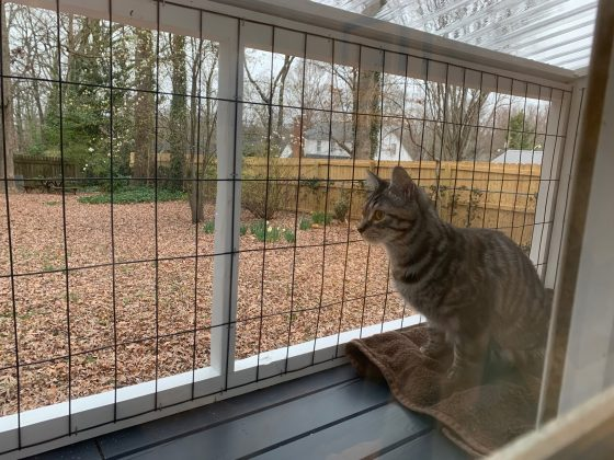 A view from inside the house out through the catio, with Pixel looking very intent in the foreground.